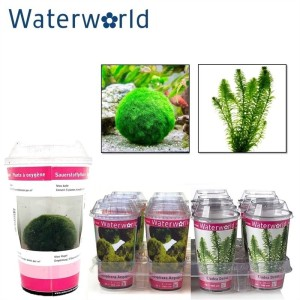 Aquatic plants MIX