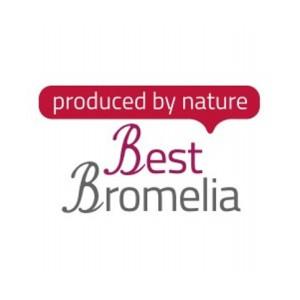 Best Bromelia
