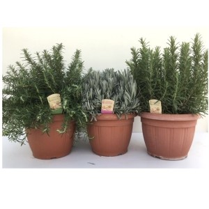 Herbs MIX (Green Collect Sales)