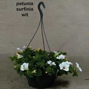Petunia SURFINIA MIX (Kwekerij den Deyl)