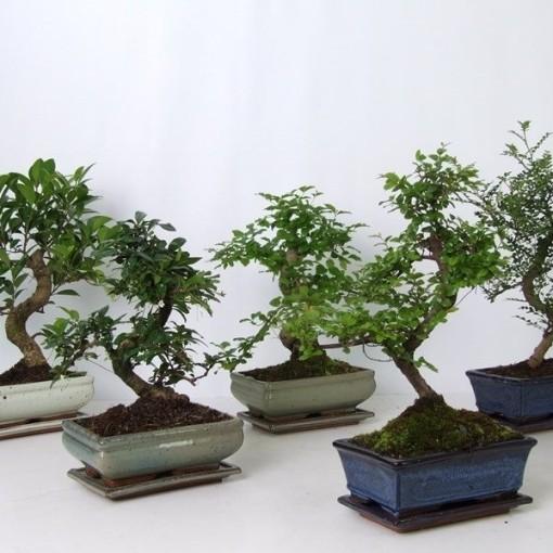 Bonsai MIX (Hkw. van der Velden)