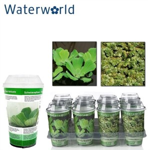 Aquatic plants FLOATING MIX
