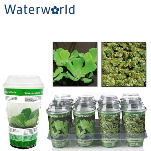 Aquatic plants FLOATING MIX (van der Velde Waterplanten BV)
