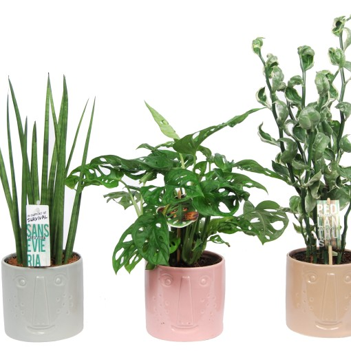 Houseplants MIX (Van der Arend Tropical Plantcenter)