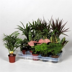 Houseplants MIX (JoGrow B.V.)