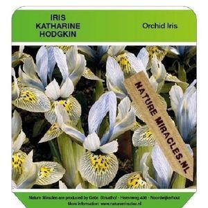 Iris 'Katharine Hodgkin' (Gebr. Straathof)