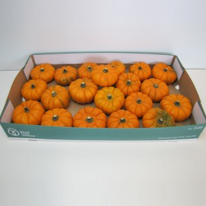 Cucurbita pepo 'Jack be Little' (4AllGreen)