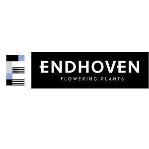 Endhoven Flowering Plants