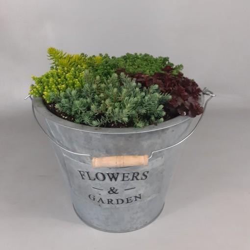 Rockery plants MIX (Croon, Kwekerij de)