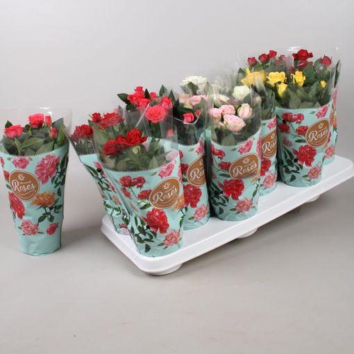 Rosa FAVOURITE ROSES MIX (Vireõ - HPD Potplanten)