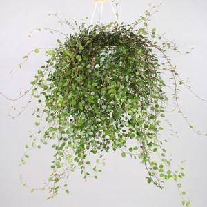 Muehlenbeckia complexa MAO'RI (Vireo Plant Sales)
