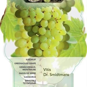 Vitis 'Dr. Smidtmans' (BOGREEN Outdoor Plants)