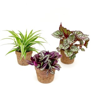 Foliage plants MIX (Kokodama)
