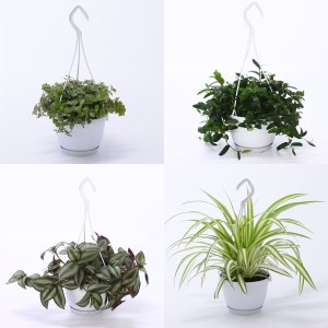 FA Hanging Plants SELECTION #112
