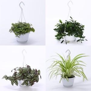 FA Hanging Plants SELECTION #112