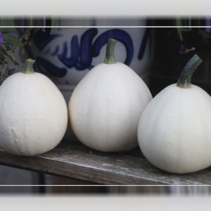 Cucurbita pepo 'Buffy Ball'