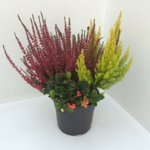 Arrangements Autumn HEIDEMIX (Experts in Green)