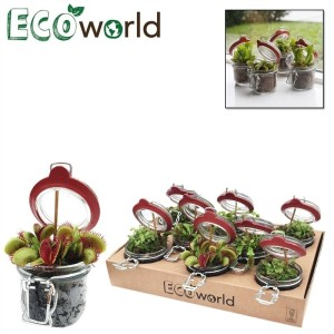 Carnivorous plants MIX (van der Velde Waterplanten BV)