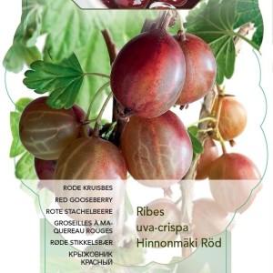 Ribes uva-crispa 'Hinnonmäki Röd' (BOGREEN Outdoor Plants)