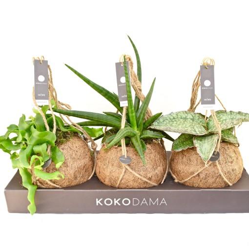 Hanging plants MIX (Kokodama)