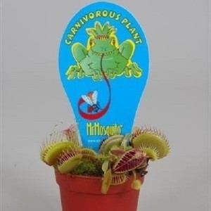 Dionaea muscipula (Stricker Plants)