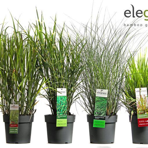 Grasses  MIX (Hoogeveen Plants)