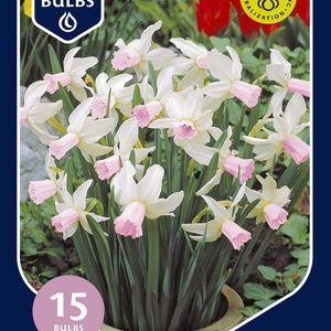 Narcissus 'Pink Pride'