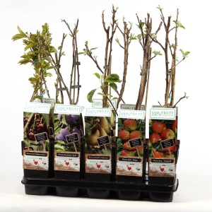 Fruit plants MIX (Hoogeveen Plants)
