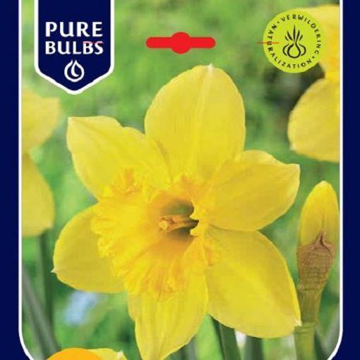 Narcissus 'Carlton' (Bosrand, Kwekerij de)