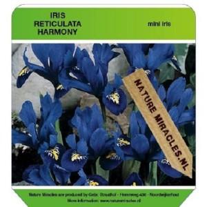 Iris reticulata 'Harmony' (Gebr. Straathof)