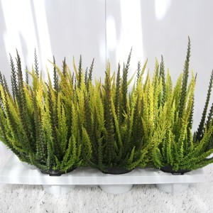 Calluna vulgaris SKYLINE MIX IN POT (Experts in Green)