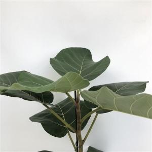 Ficus auriculata 'Everest' (De Wilgenlei b.v.)