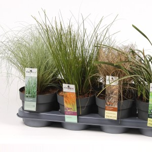 Carex MIX (Hoogeveen Plants)