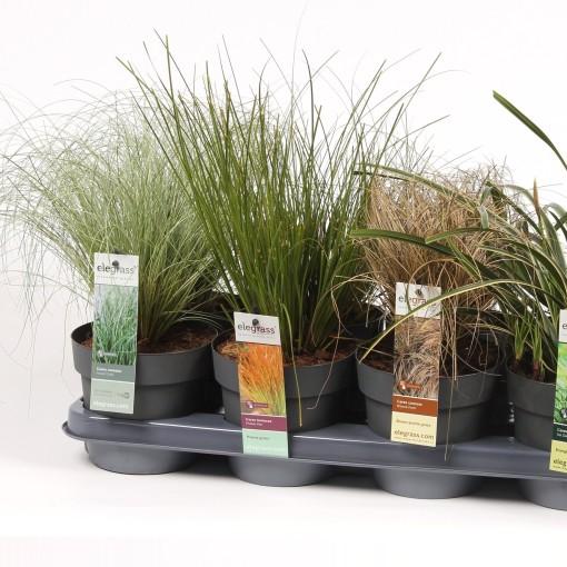 Carex MIX (Hoogeveen Plants)