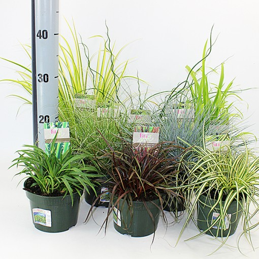 Grasses  MIX (Experts in Green)