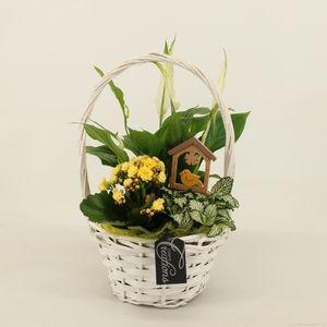 Arrangements Houseplants