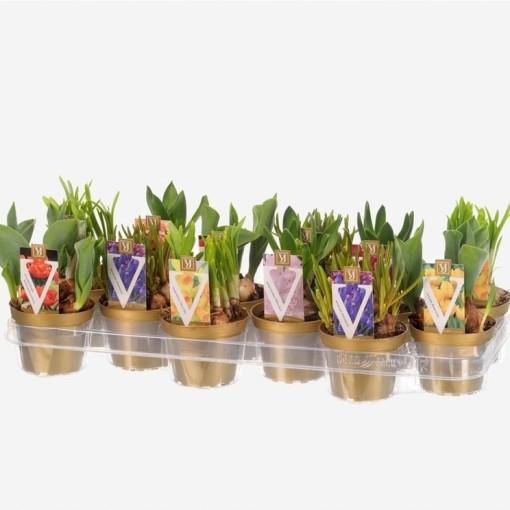 Bulbous plants MIX (Vossen B.V., J.H van der)