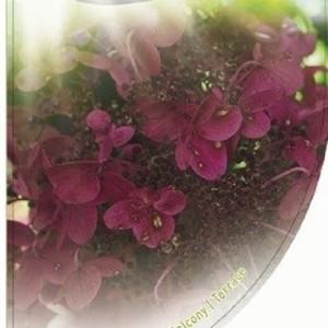 Hydrangea paniculata 'Wim's Red' (Dool Botanic)