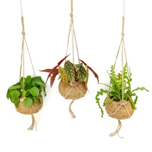 Hanging plants MIX (Kokoplant)