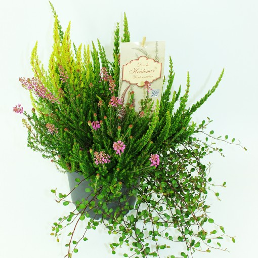 Heath MIX (Experts in Green)