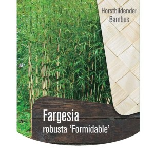 Fargesia robusta 'Formidable' (Oprins Plant)