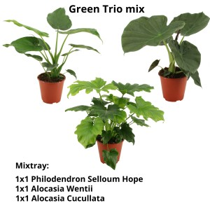 Houseplants MIX