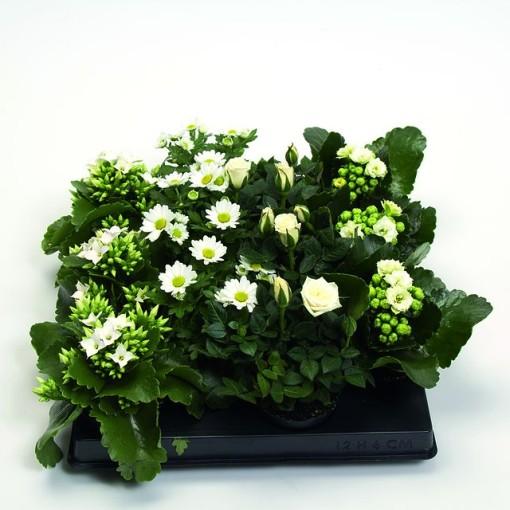 Houseplants MIX WHITE (Gasa DK)