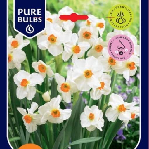 Narcissus 'Geranium' (Bosrand, Kwekerij de)