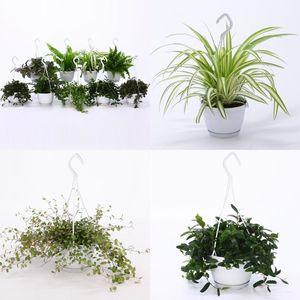FA Hanging Plants SELECTION #207