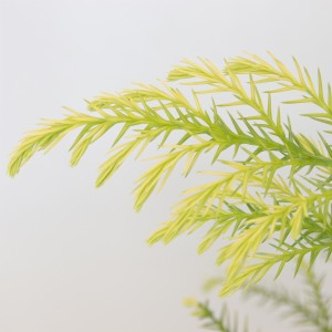 Cryptomeria japonica 'Sekkan' (Bremmer Boomkwekerijen)
