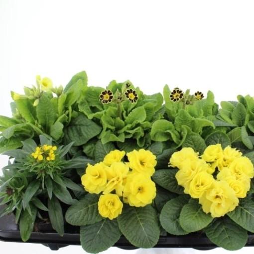 Perennials MIX (Noordpoel, Kwekerij de)