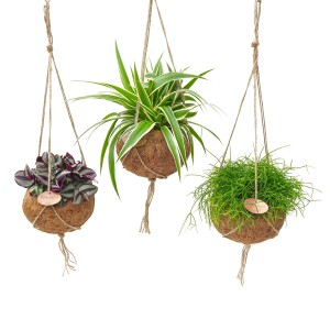 Hanging plants MIX (Kokodama)