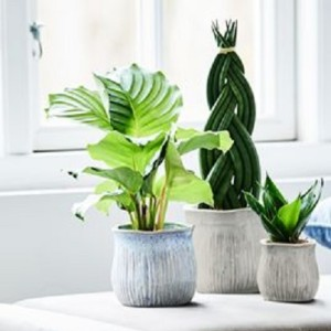 Houseplants MIX