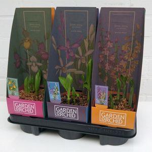 Orchids GARDEN MIX